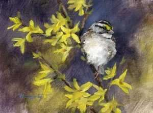 6x8 inch painting of a White-throated Sparrow on Forsythia